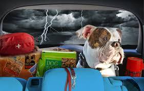 disaster-preparedness-for-pets