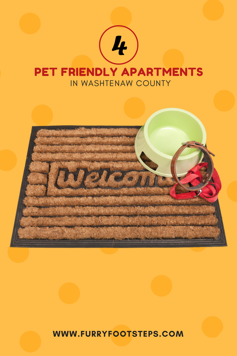Your pet s will love these pet friendly apartment for Most apartment friendly dogs
