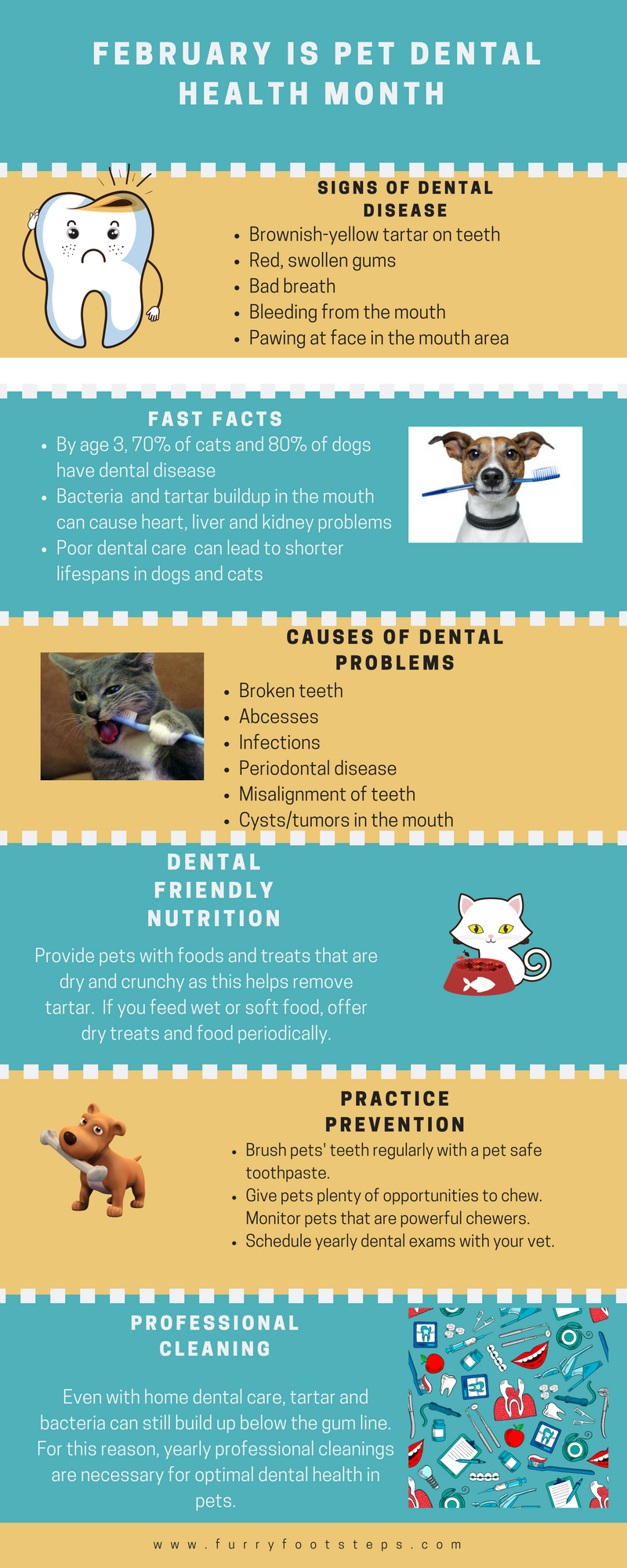 This Can Cause Severe Long Term Health Issues And Pets So Good Pet Dental Is Critical For The Quality Of Life Cats Dogs