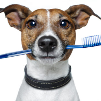 The Importance of Dental Care for Your Pets