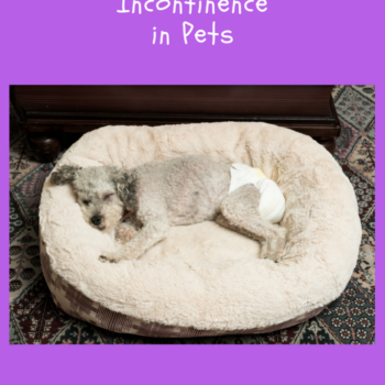 Pet Incontinence and Its Causes