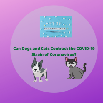Can Dogs and Cats Get Coronavirus